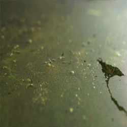 Algen bekaempfen Kamhaut