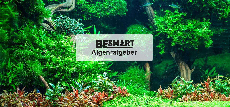 algenratgeber das optimale pflanzenwachstum gegen algen. Black Bedroom Furniture Sets. Home Design Ideas